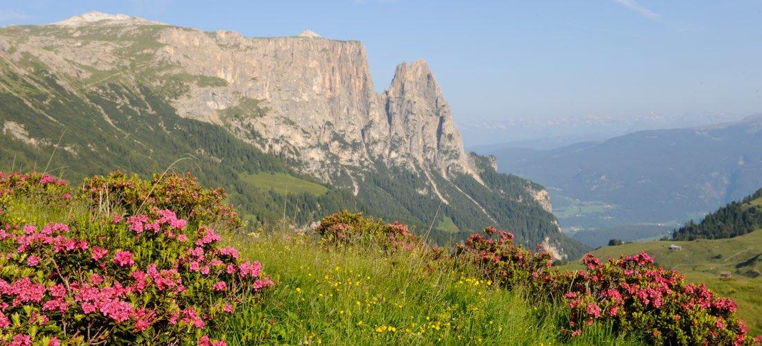 Alpe di Siusi – un Eldorado per escursionisti e amanti della natura